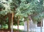Свищовски манастир - Манастирският двор