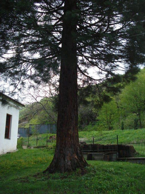 Германски манастир (Снимка 32 от 46)