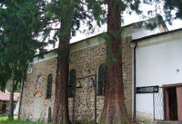 Германски манастир - Двете секвои пред църквата